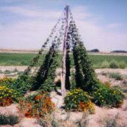 Year old Cascade hops on a tee-pee in Morrill, Nebraska.
